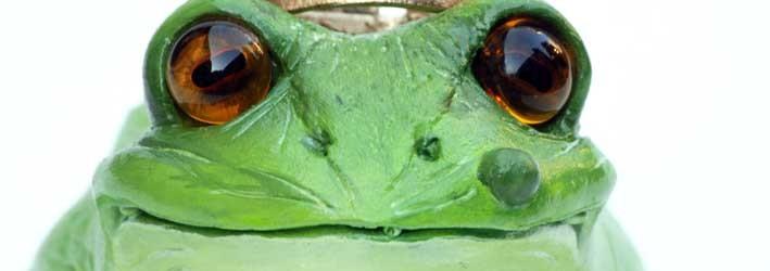 Frosch 1 klein